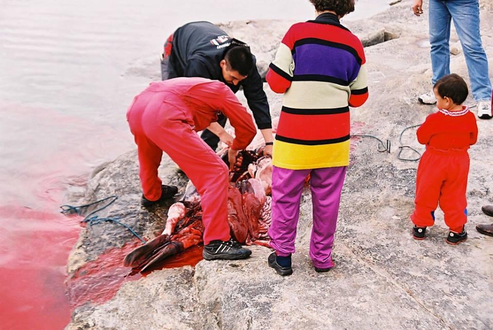 Sæljagt i Grønland