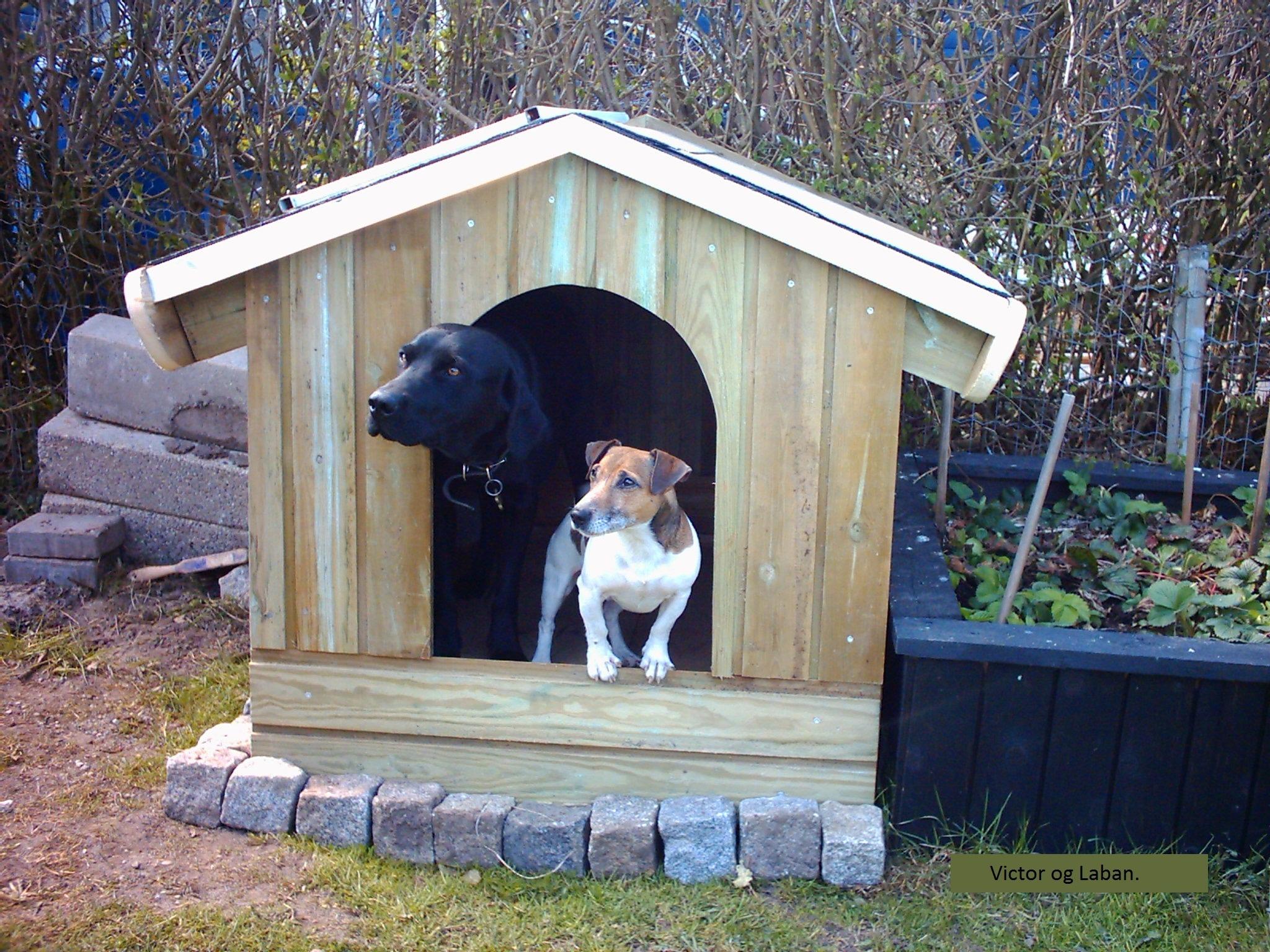 forventningsfulde-hunde