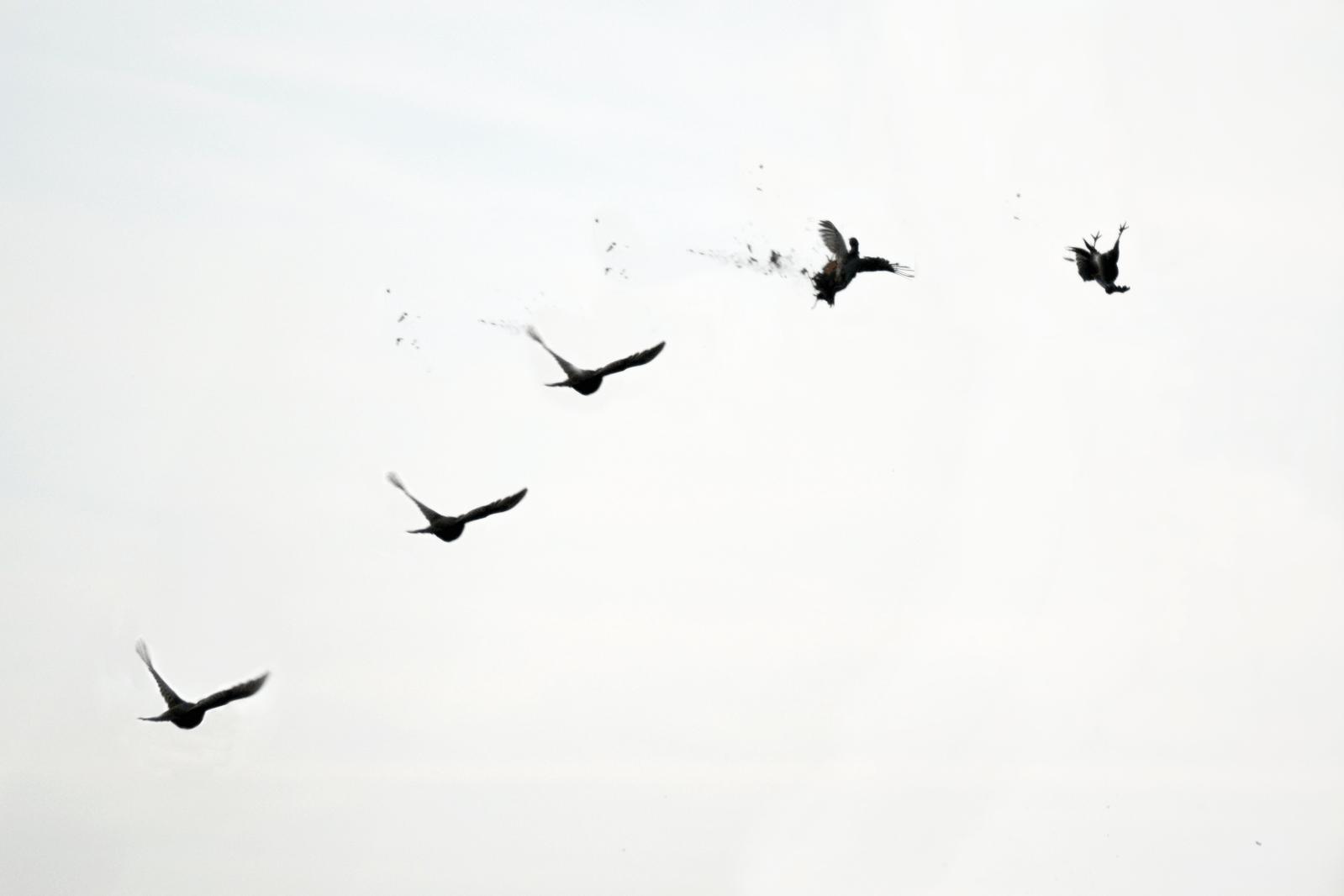 Der er kun én fugl på billedet
