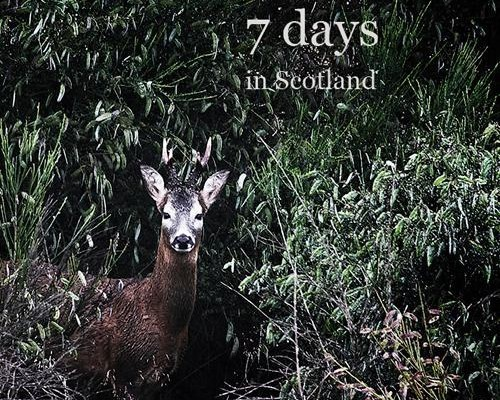 7_days_in_scotland