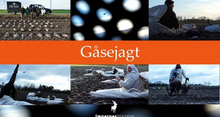 gåsejagt - film om gåsejagt i Danmark