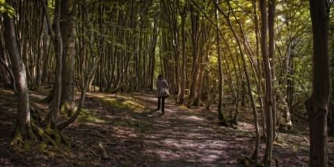 Gå i skoven foto Steve Slater