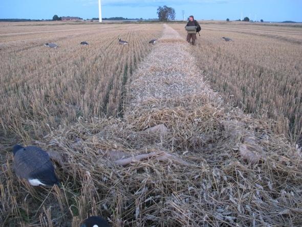 Gåsejagt Skjul på nyhøstet mark