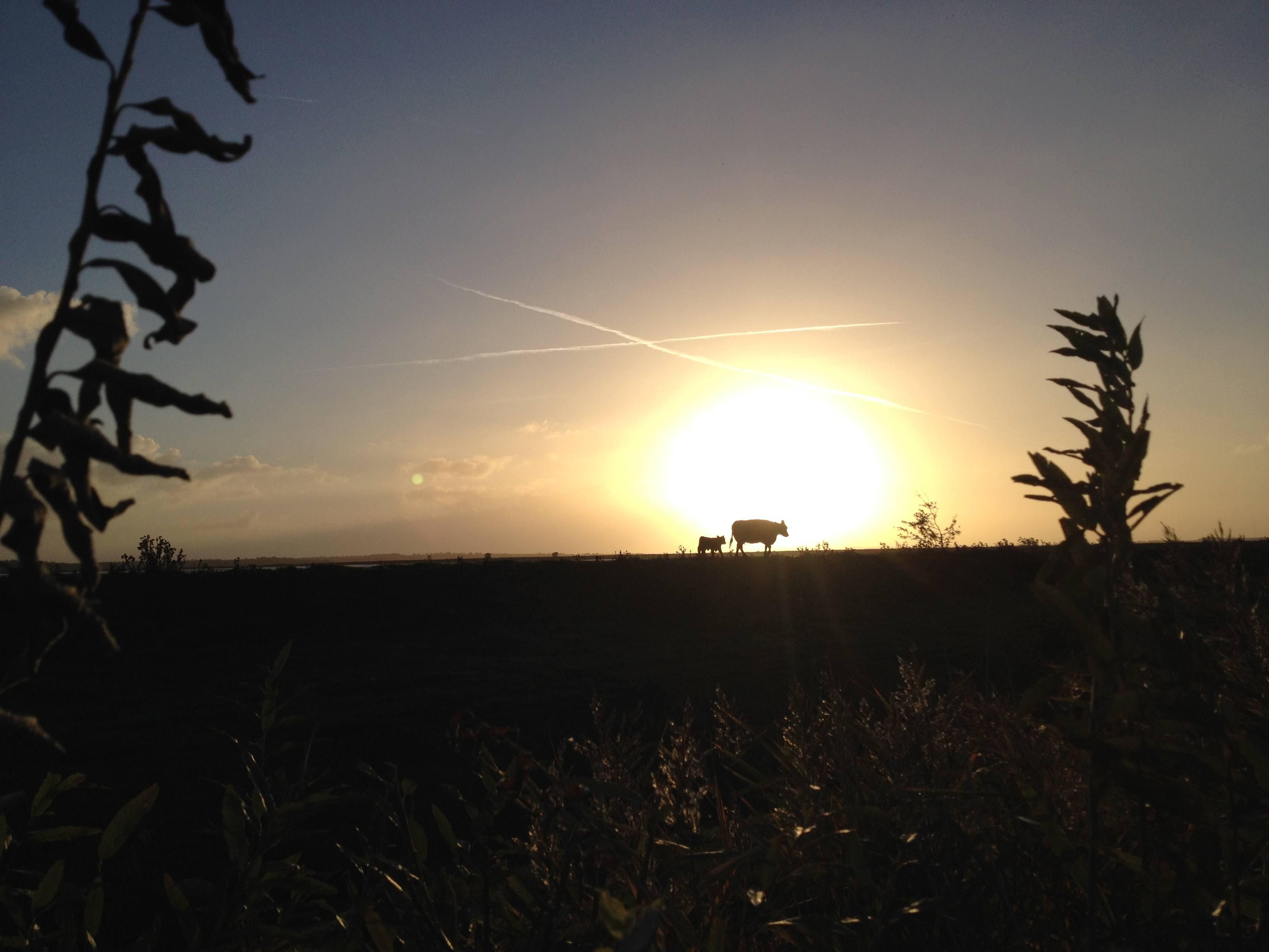 En smuk morgen med en smuk afslutning