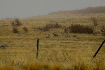 Jagt i hegn foto Luke Detwiler