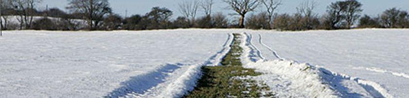 Råvildt føde vinter