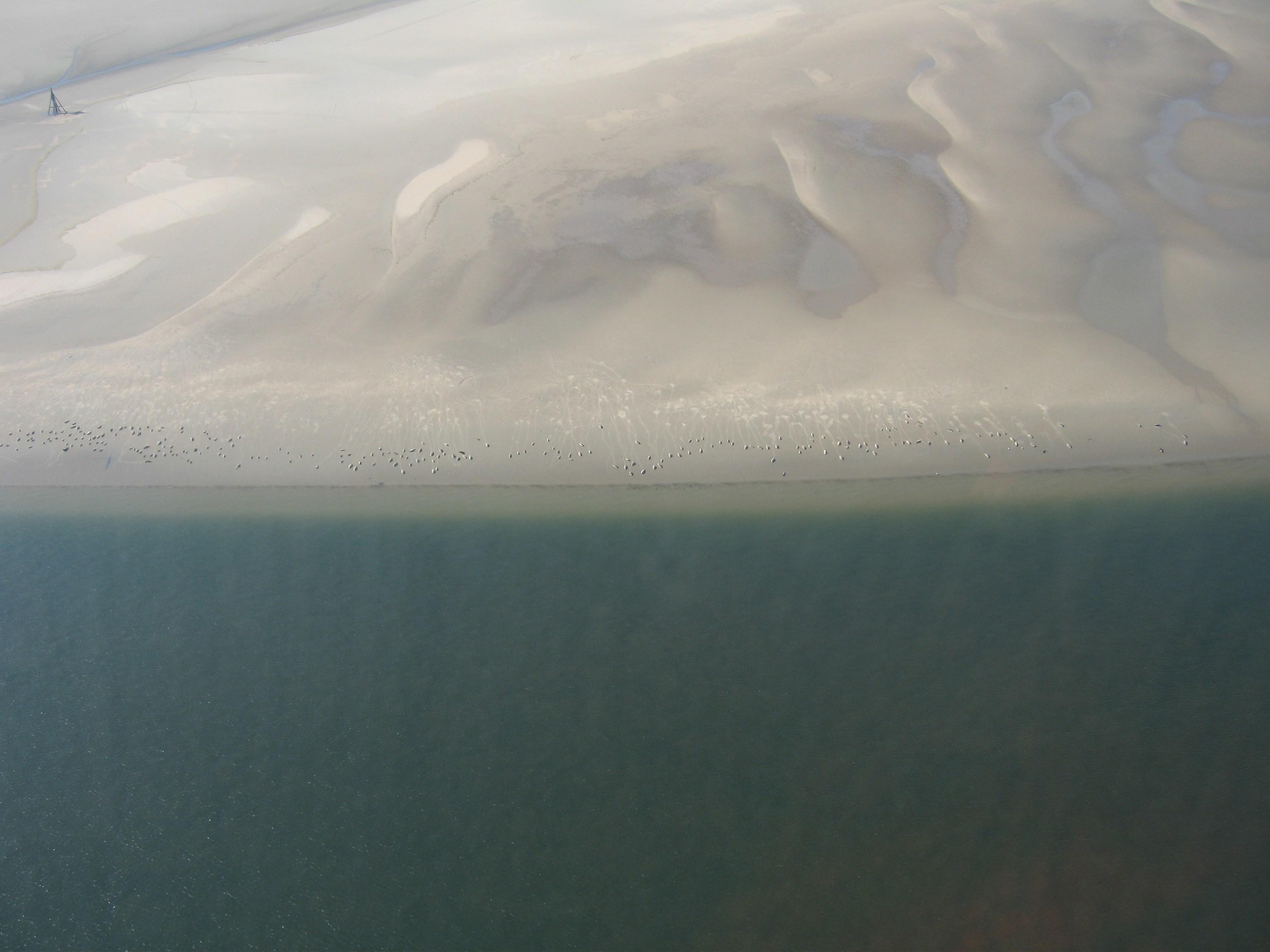 Flyoptælling af sæler over Rømø