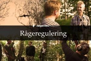 Regulering af rågeunger