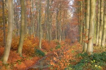 Skoven foto Frans den Oudsten