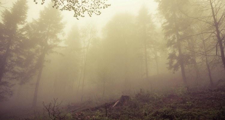 Skovrejsning Foto Kamil Porembiński