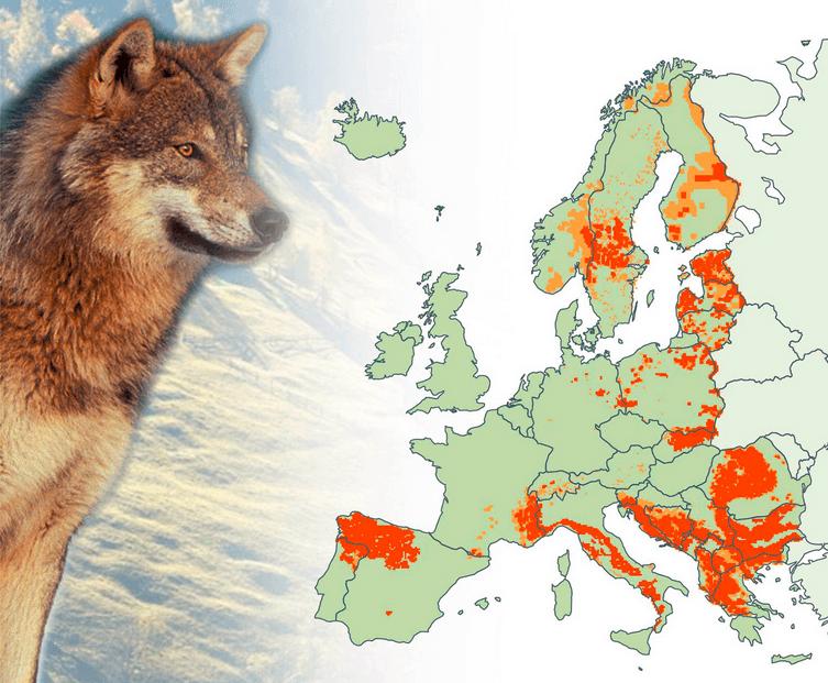 Ulvens udbreddelse i EU 2012. Foto European Commission
