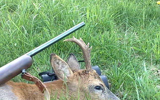 bukkejagt 6 ender skudt med otterup jagtriffel