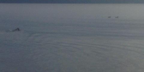 Jagthund svømmer efter ænder