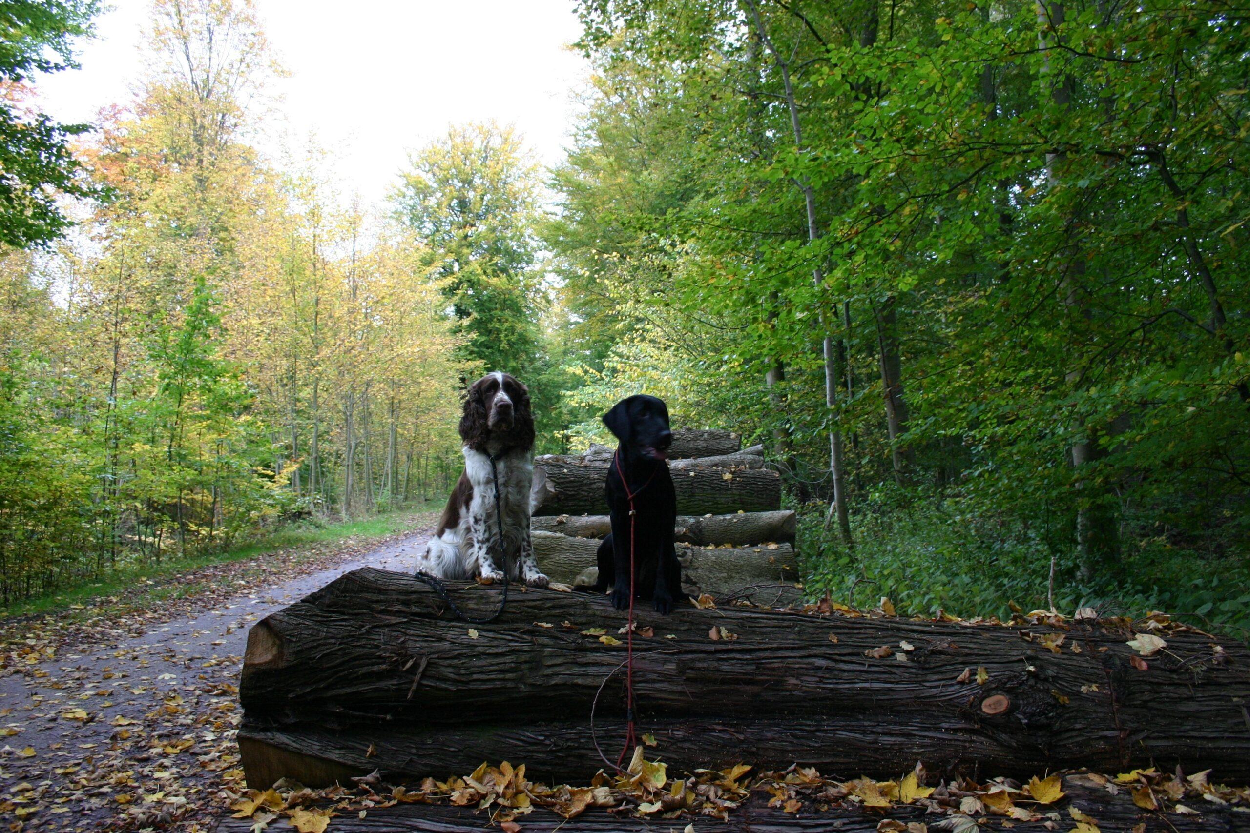 Efter i skoven