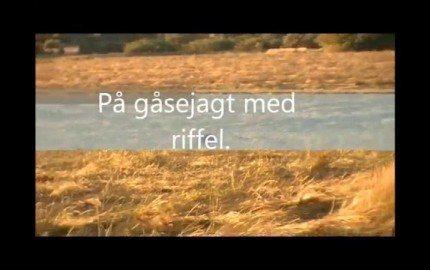 Video thumbnail for youtube video Gåsejagt med riffel - Videoer - Jagt Magasin - Jægernes Magasin