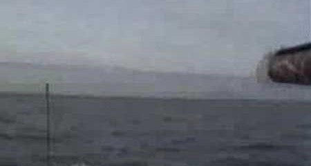 Havjagt på havlit