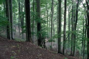 hochsitz og skydestige i bøgeskoven