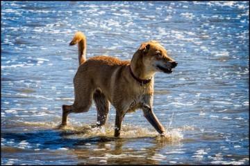 hund på stranden, foto Ehaug