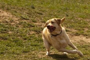 hund frank pierson
