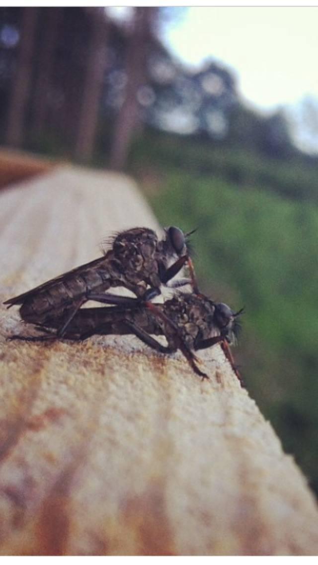 2 fluer der hygger sig i tårnet