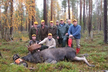Moose hunt in Lapland