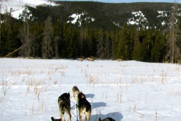 img_2719_elk_bulls_seen_from_dog_sled