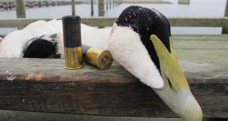 Vildtudbytte for jagtsæson 2012-2013