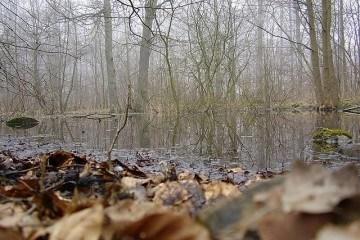 Jagt udlejes aarhus kommunale skove