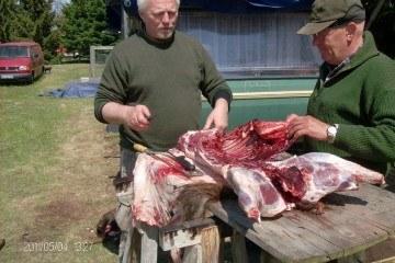 slagtning af vildsvin