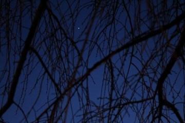 krybskytteri_om_natten_foto_sarah_croteau