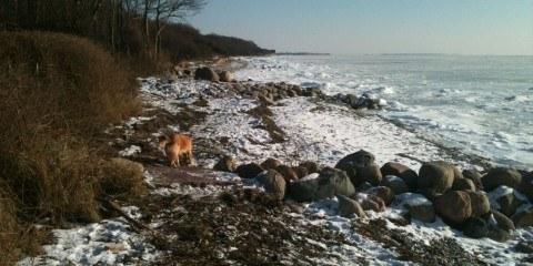kysten vinter is hund og sne