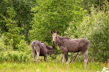 nye regler for elgforvaltning i sverige fra 1. januar 2012