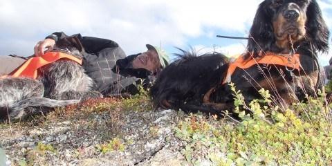 Jagt med Mersmak