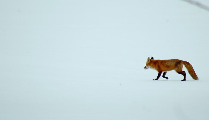 raev_om_vinteren._foto_carly_lesser