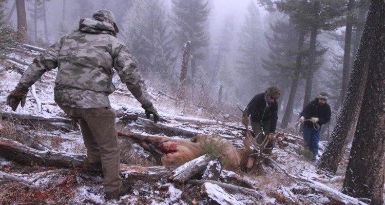 Elk Montana