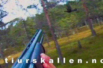 Rypejagt og skogsfugljakt i Norge