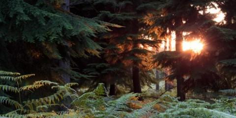 skov i sydengland