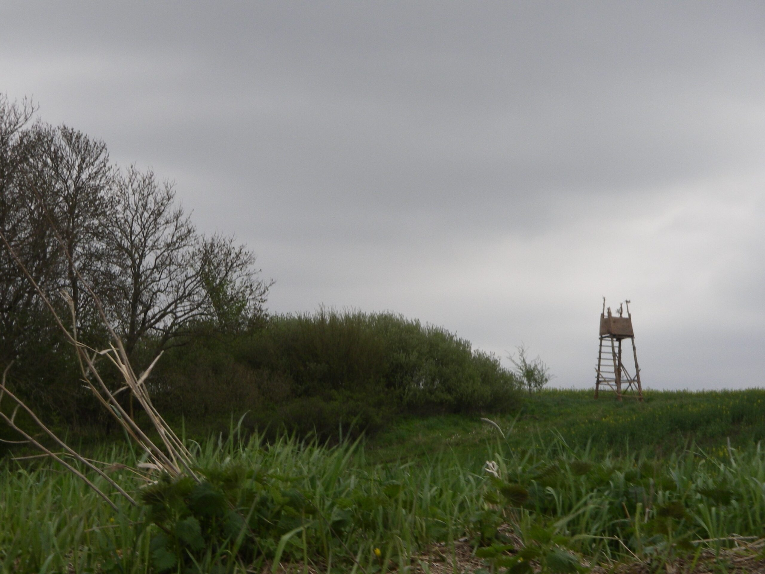 skydetårn