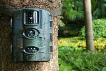 Vildtkamera på træ